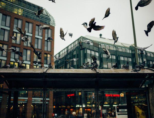 Kolce na ptaki – walka o czystość parapetów w Krakowie