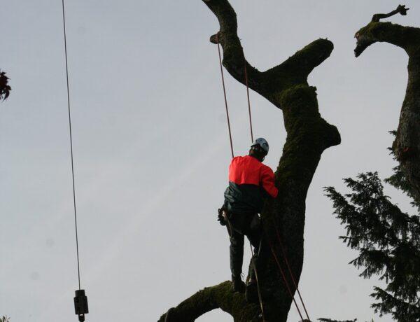 Pielęgnacja drzew w miastach