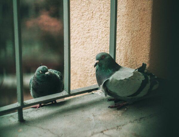 Siatki przeciw ptakom – sposób na czysty parapet
