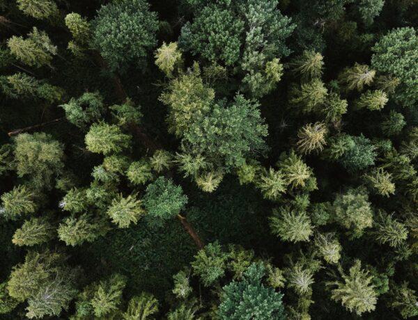 Pielęgnacja wysokich drzew w Krakowie